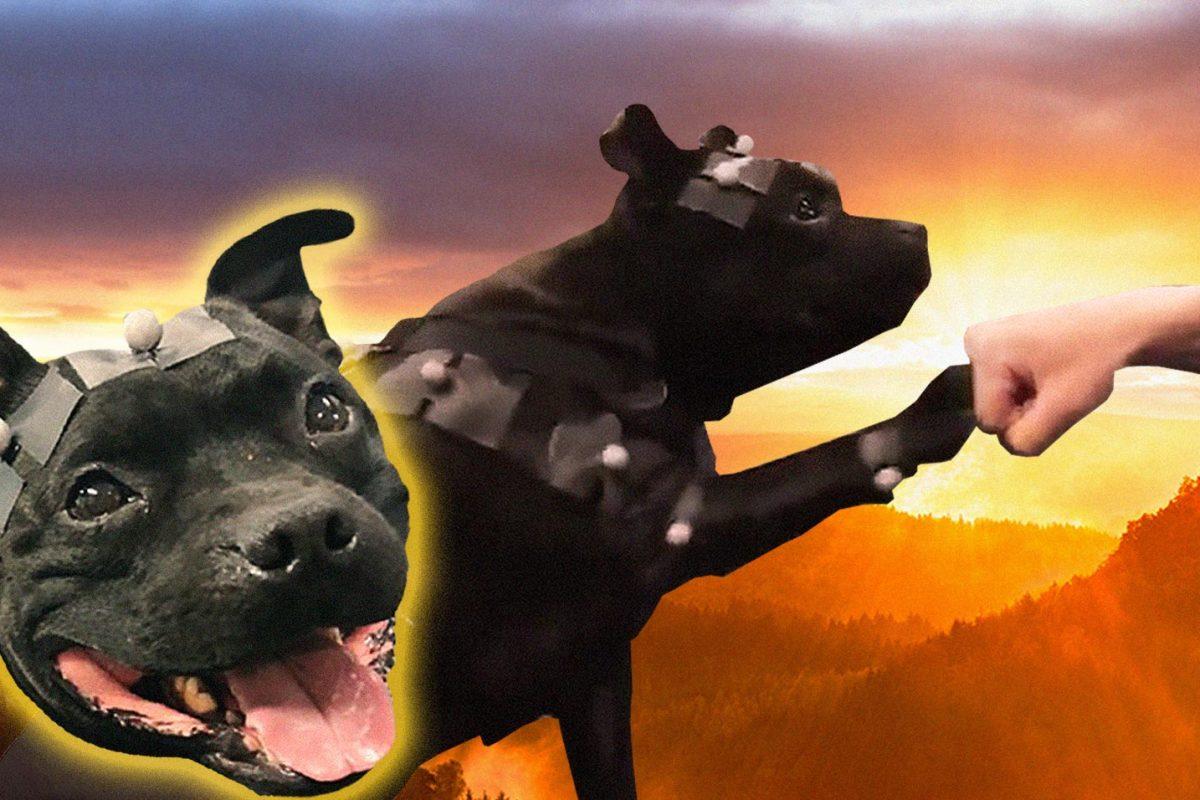 Uuno the Dog: Η νέα, ερωτεύσιμη μασκότ της Remedy.